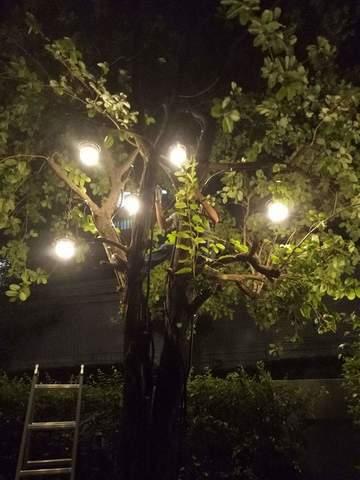 ติดตั้งระบบไฟภายนอกและติดดวงโคมบนต้นไม้
