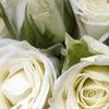 Thumb kenya rose white