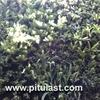 Thumb vertikal gardennnn