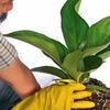 Thumb merawat tanaman oleh jasa tukang taman